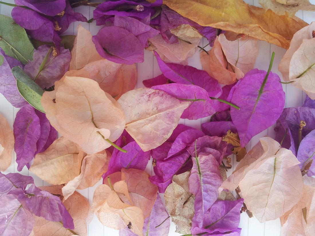 leavesforimagine